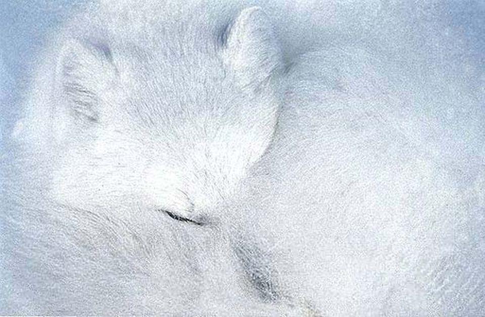 Haare bei Tieren: Ein Fell für jeden Zweck