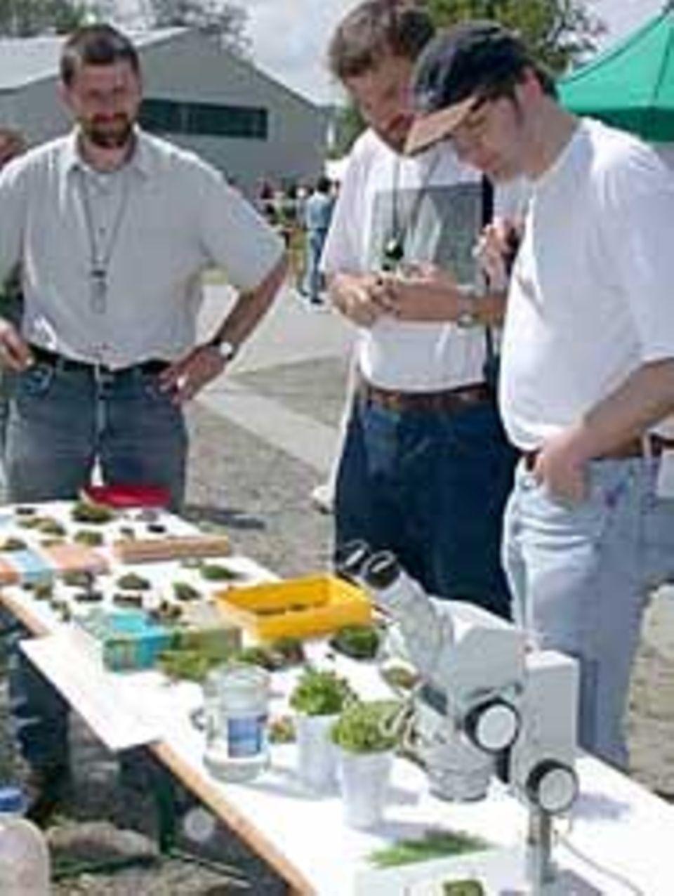 Stolze Ausbeute: Über 50 verschiedene Moosarten fanden die Moos-Experten im Goor