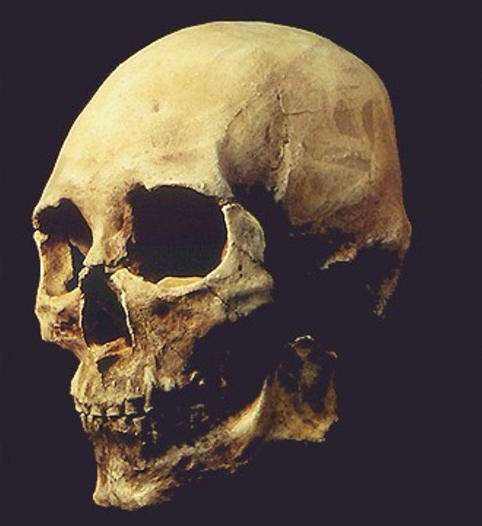 """1996 wurde im US-Bundesstaat Washington das Skelett eines Mannes gefunden. Er hatte vor über 9400 Jahren gelebt, und seine Gesichtsform deutet auf eine europäische - oder südostasiatische - Herkunft. Bis heute ist die Abstammung des """"Kennewick Man"""" nicht eindeutig geklärt"""
