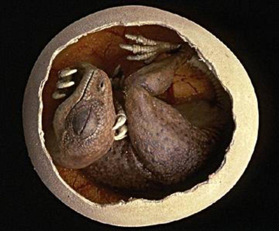 Auch Saurier haben klein angefangen, das weiß man durch Funde von Embryos in der Eierschale - hier ein Therizinosaurus-Modell nach einem Orginal, das in der Mongolei entdeckt wurde