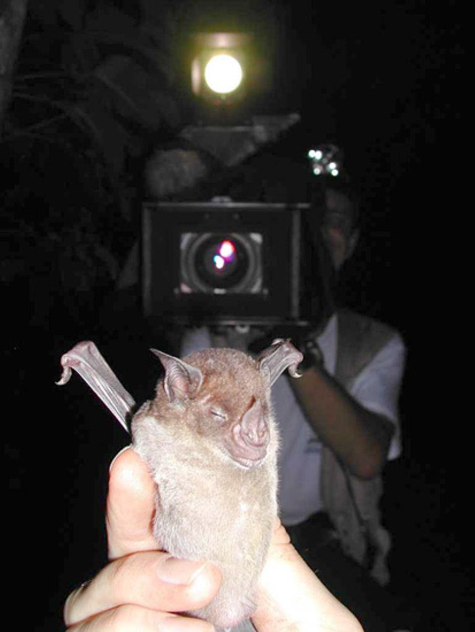 Die Fledermäuse haben sich längst daran gewöhnt, dass Detlev Kelm mit der Infrarotkamera in ihren Bäumen herumstöbert.