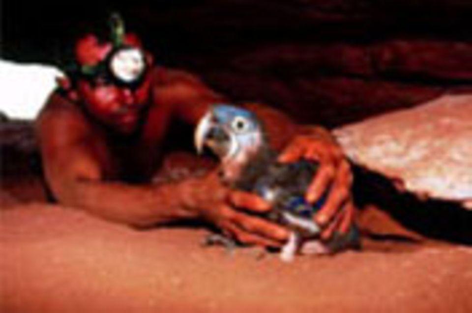 Brasilien: Schutzprogramm für Aras