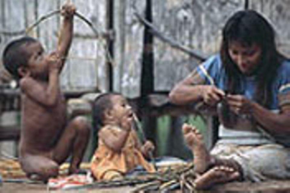 Amazonien: Schweizer Hilfe für die Kulina und Kanamari