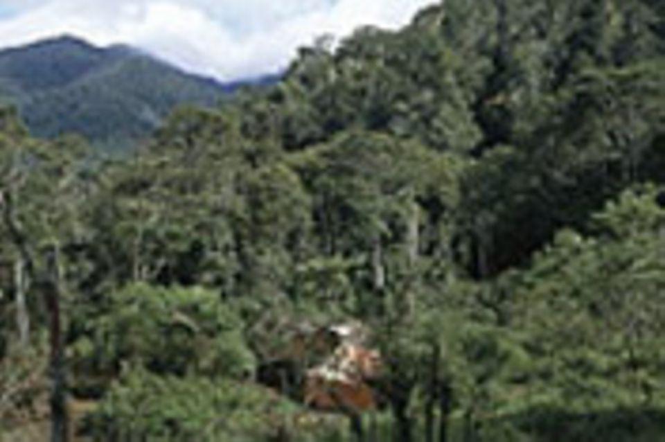 West-Papua: Schutz für die Urwälder