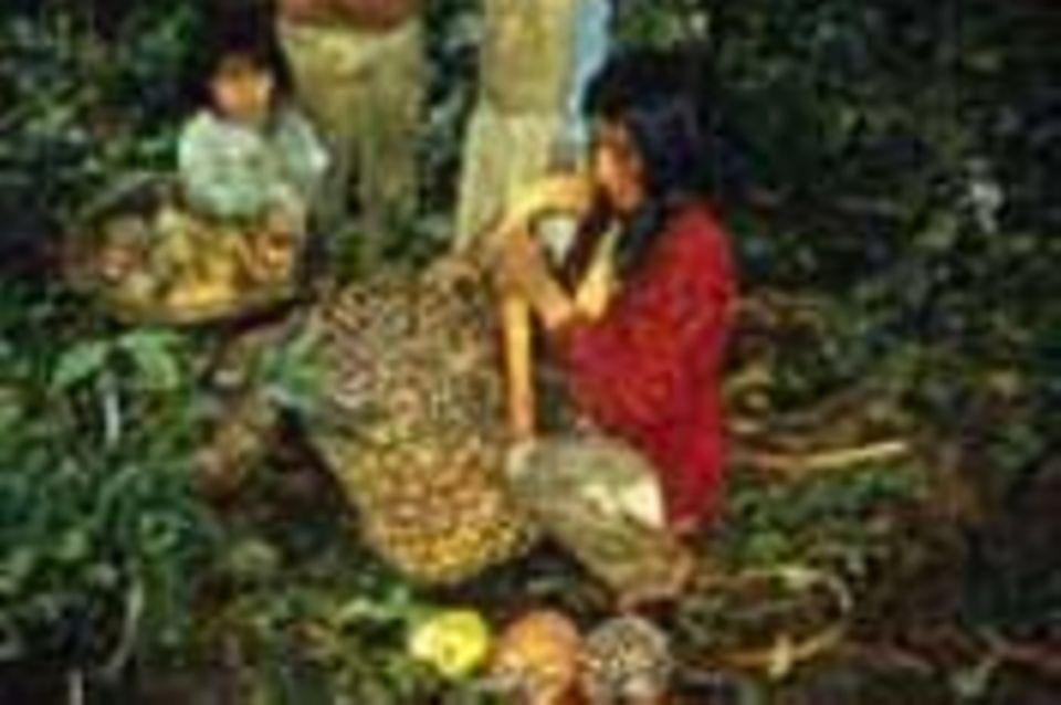 Kolumbien: Öl aus Milpeso-Palmen