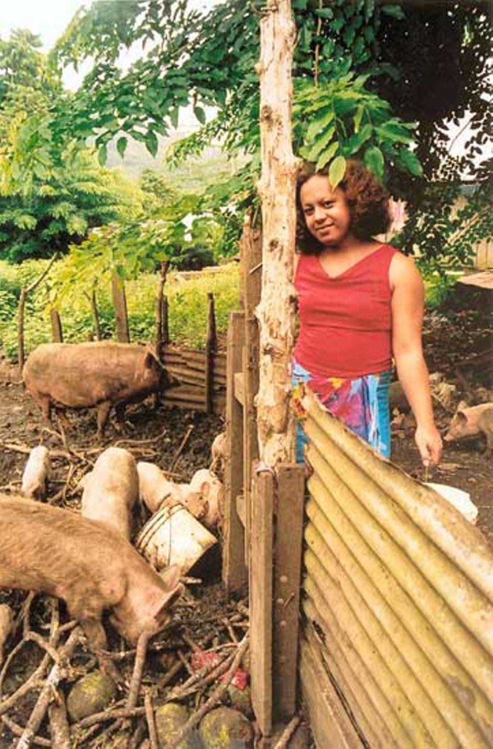 Vester füttert die Schweine. Die weiblichen Männer Samoas sind Teil der traditionellen Kultur und haben eine feste soziale Rolle