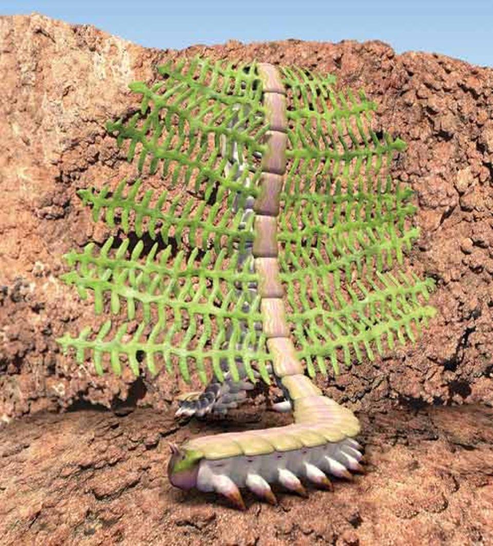 Der Gärtnerwurm nimmt ein Sonnenbad. Millionen von Algen in seinen Anhängseln betreiben Photosynthese