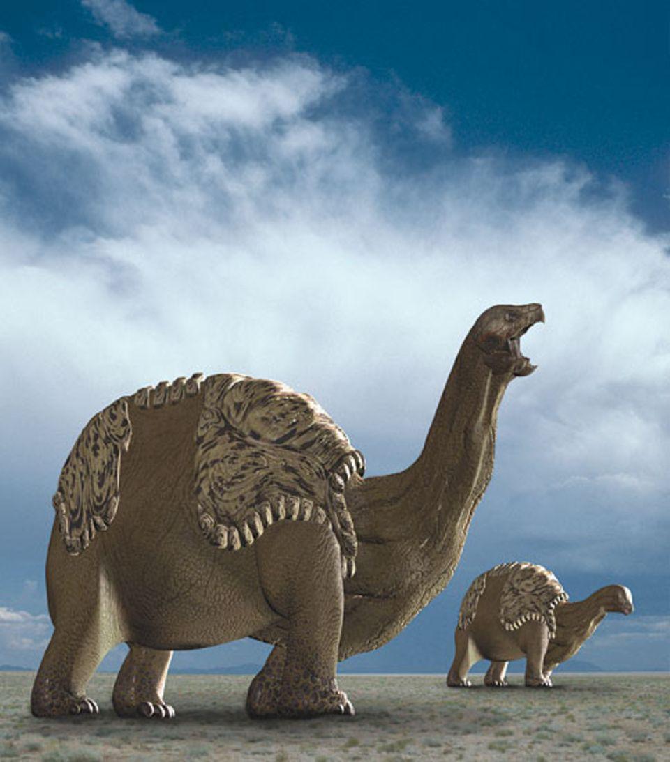 Dinoschildkröten bewegen sich langsam und schwankend. Sie fressen jede Pflanze, die sie finden können