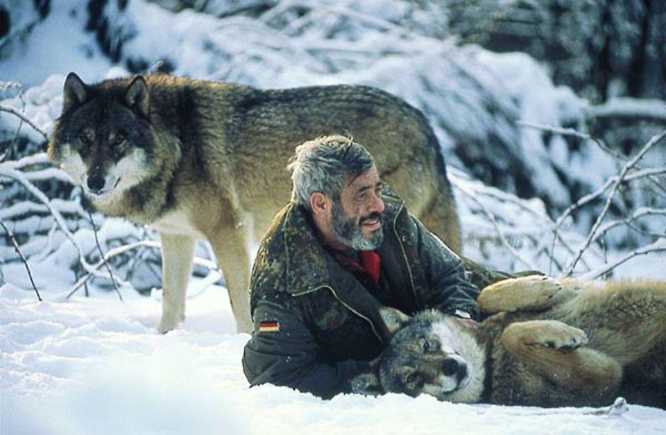 Werner Freund spielt und rangelt mit den Wölfen, als wären sie seine Kinder