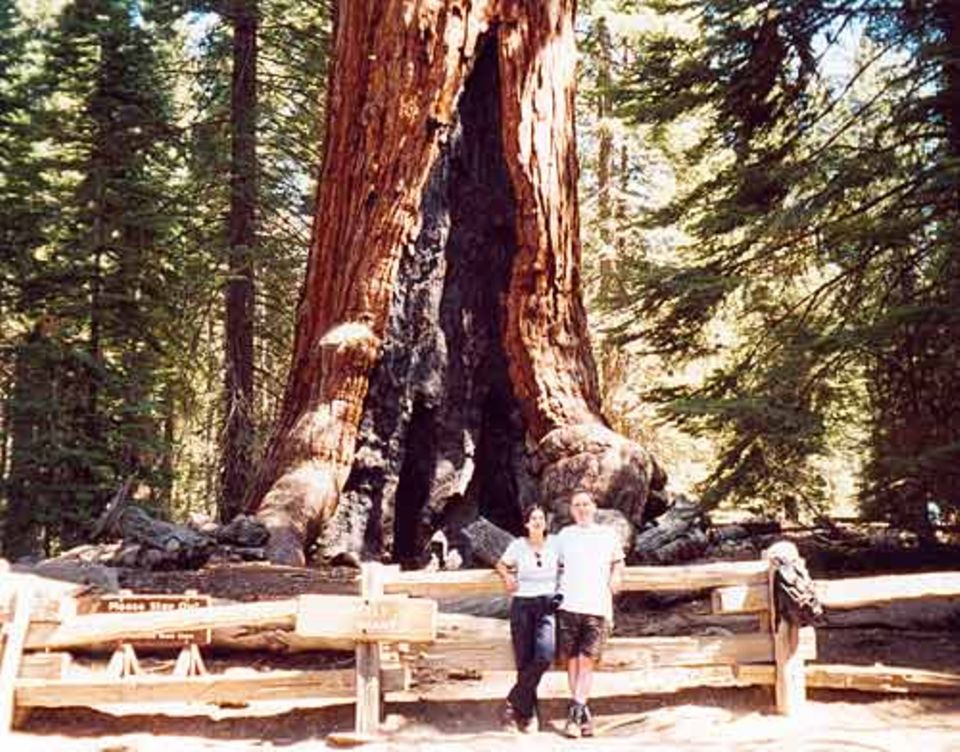 Pflanzen: Blitzeinschläge haben diesen riesigen Baumstamm ausgehöhlt