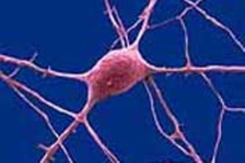 Nerven - Die nützlichen Quasselstrippen