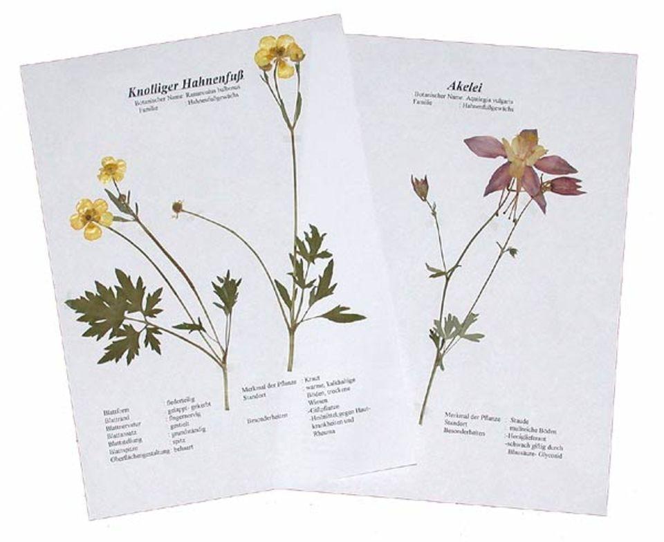 Der Ökologiekurs der Berufsbildenden Schule Quedlinburg hat einheimische Pflanzen sorgfältig in Herbarien angelegt