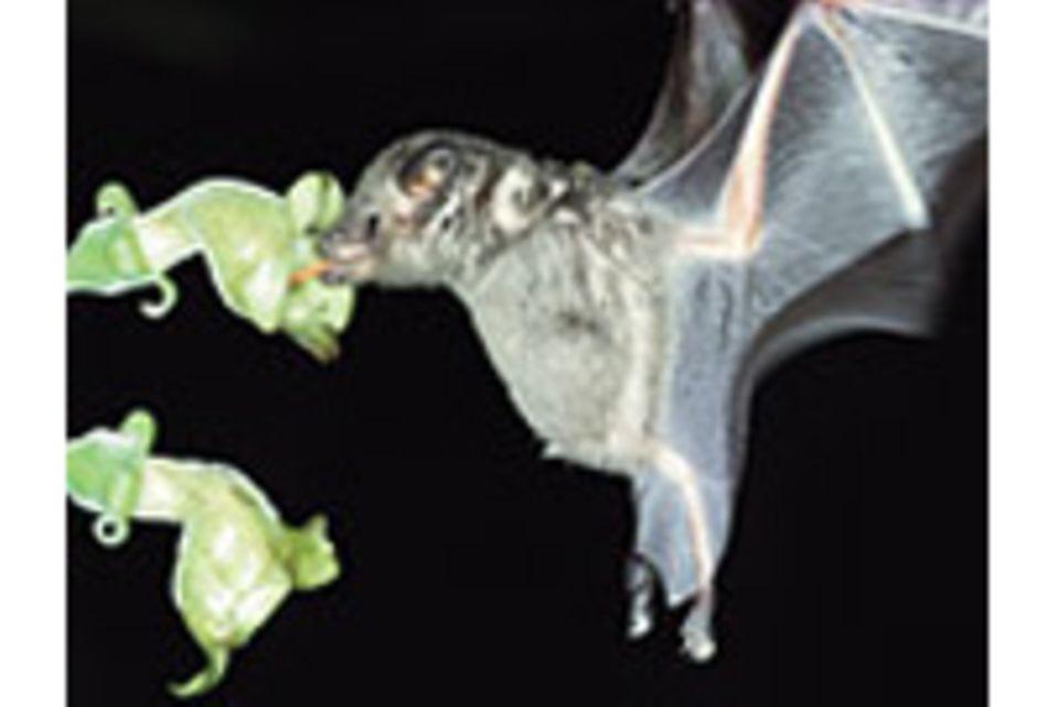 Zoologie: Aus Mausgrau wird UV