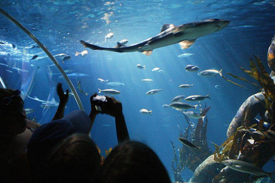 Meeresbiologie: So nah möchte man den Räubern der Meere im wirklichen Leben nicht begegnen