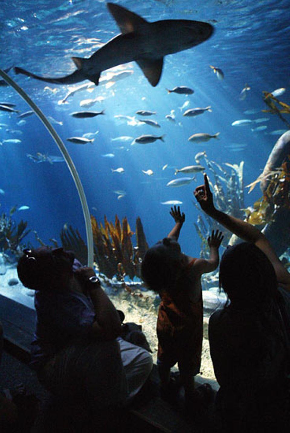 Meeresbiologie: Unterwassertunnel bieten faszinierende Einblicke in die Unterwasserwelt der Ozeane