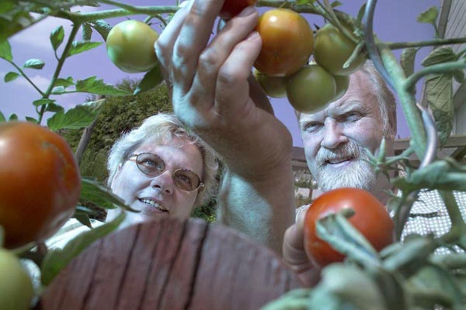 """Mondkalender: Auf Gedeih und Verderb: Seit zehn Jahren führen die Breidenbachs ihre Gärtnerei nach dem Mondkalender. Tomatensetzlinge etwa kommen nur an """"Fruchttagen"""" in die Erde"""