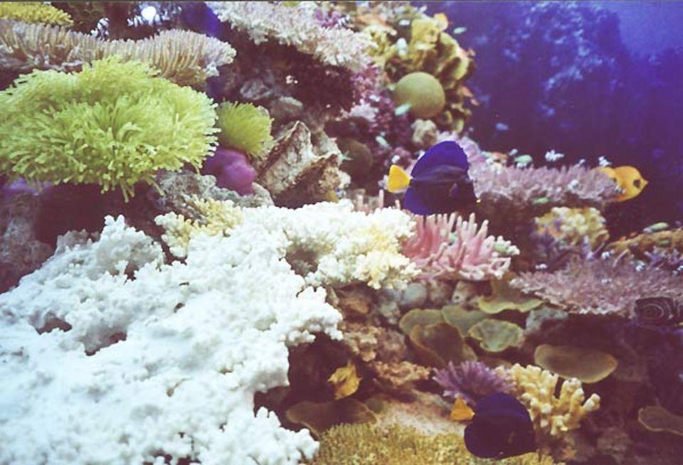 Fotoshow: Neben Fisch- und Anemonen-Modellen ist auch echtes Korallengestein Bestandteil des Riffs