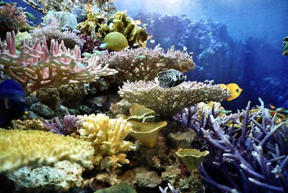 Fotoshow: Hinter den Korallen und Anemonen scheint die Sonne auf das Wasser zu scheinen