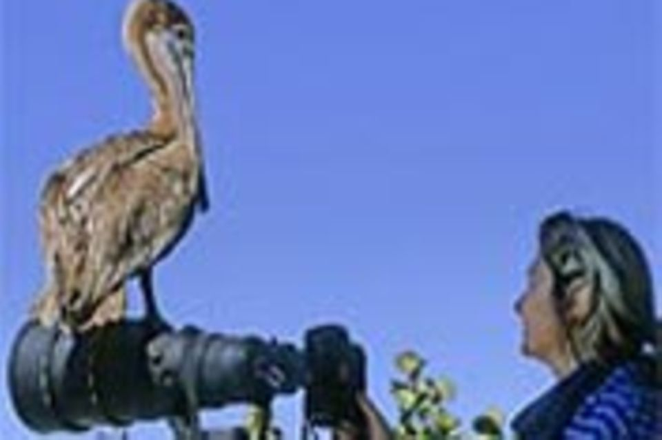 Beruf: Tierfotograf