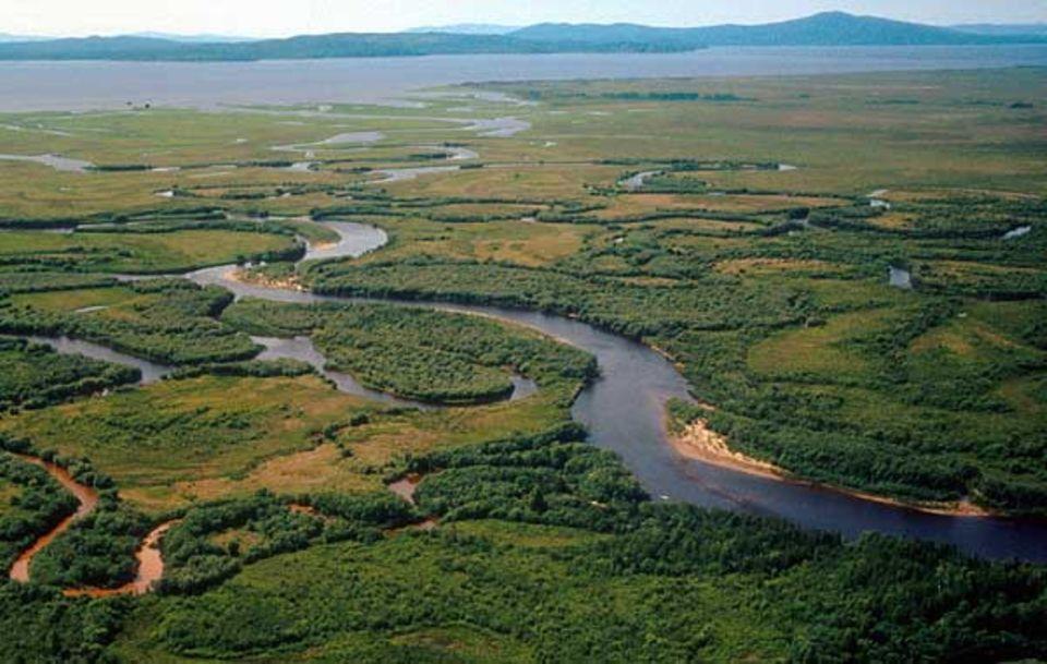 Artenschutz: In dieser Flusslandschaft im Amurgebiet, wo noch Sibirische Tiger leben, ist eine Autobahn geplant