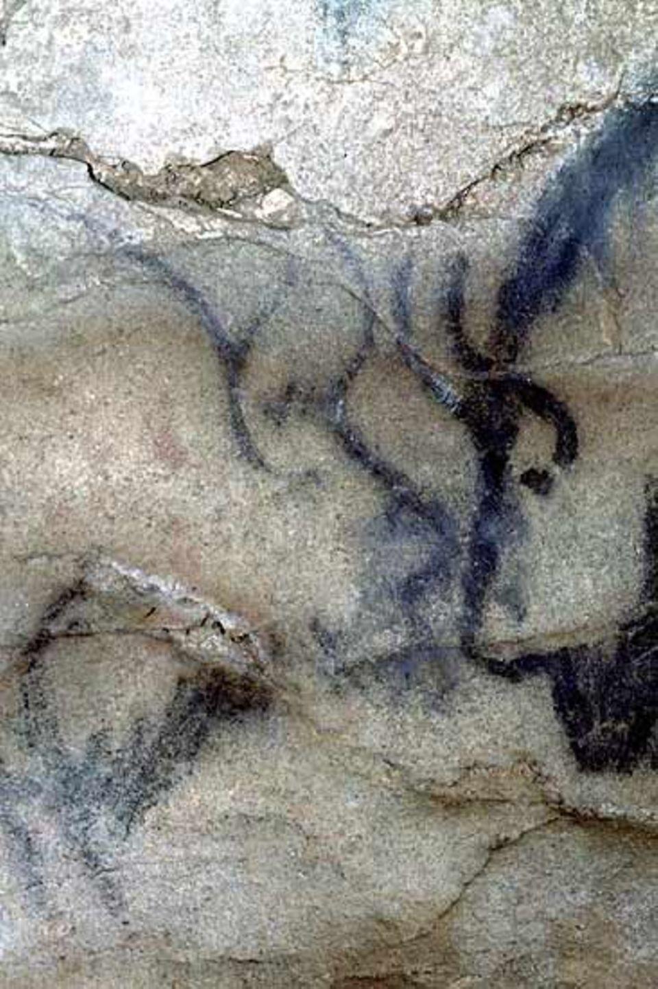 Zwei Wisente in der Höhle Le Portel (Südwest-Frankreich)