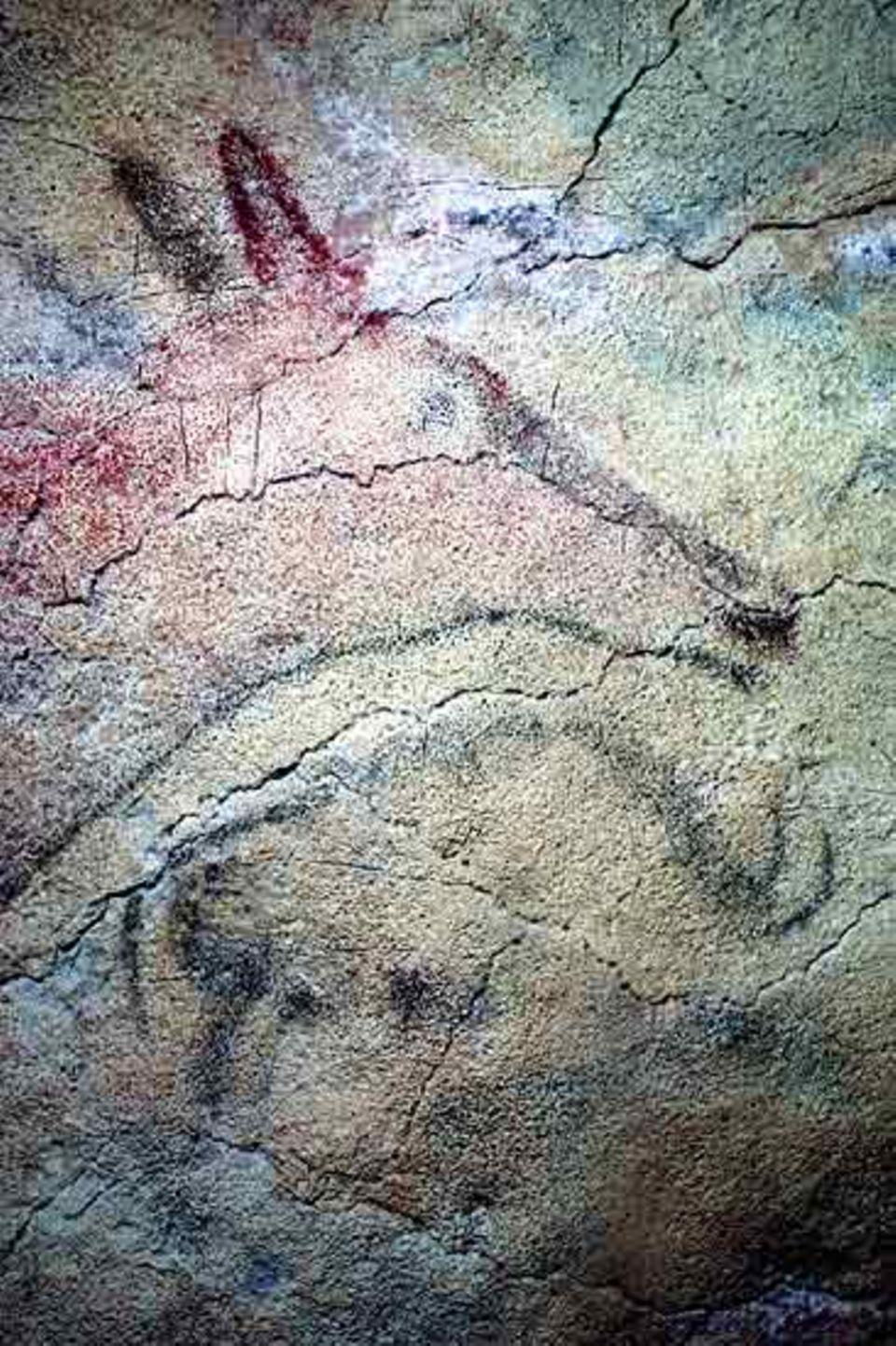 Ein Hirsch und ein Bison in der Höhle Altamira (Nord- Spanien)