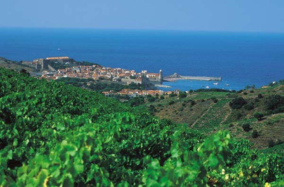 Die Weinberge oberhalb von Collioure