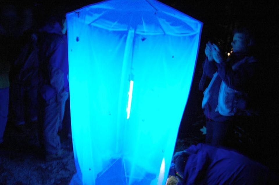 Der Trick mit der Lichtfalle: Falter und andere Insekten fliegen auf Blau