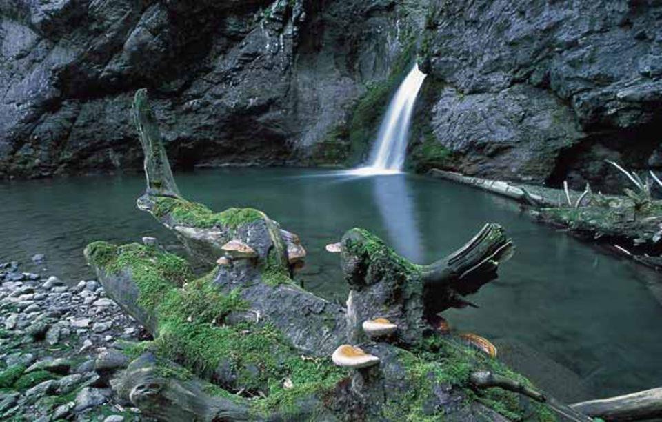 Die Schlucht des Bergbachs Julia liegt so abgeschieden, dass sich kaum ein Tourist dorthin verirrt