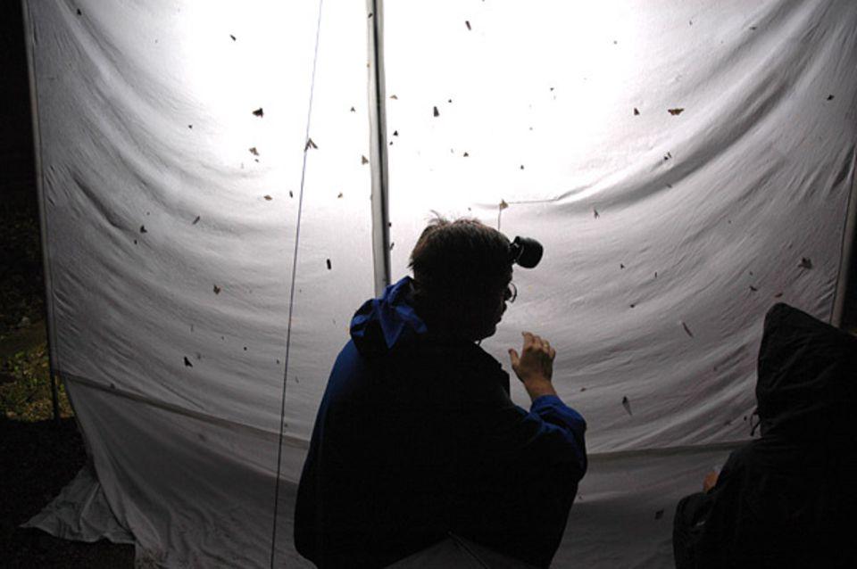 Dr. Peter Huemer vom Tiroler Landesmuseum Ferdinandeum ist ein echter Insektenfreund