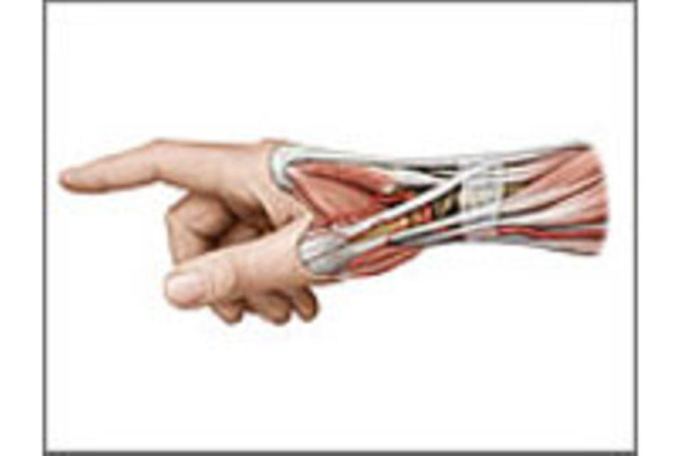 Muskeln: Die Mobilmacher