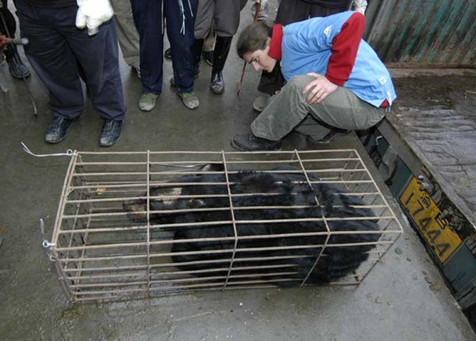 Kati Löffler, Tierärztin der AAF, wirft gleich bei der Ankunft einen ersten besorgten Blick auf die Bären