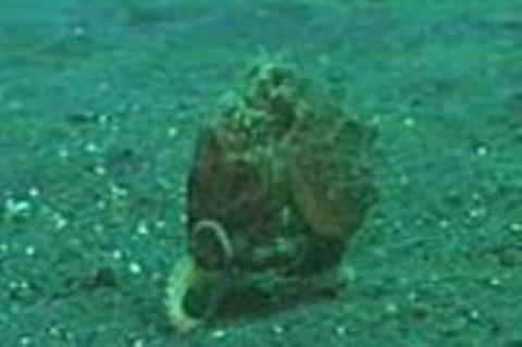 Kraken: Zweibeiner der Meere