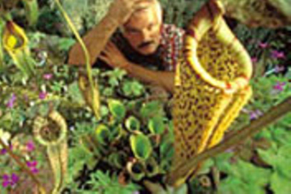 Pflanzensammler: Im Bann der Botanik