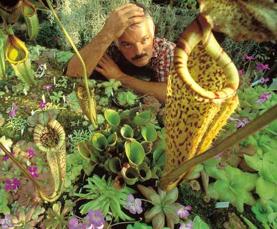 Christian Klein kultiviert Fleisch fressende Pflanzen aus aller Welt