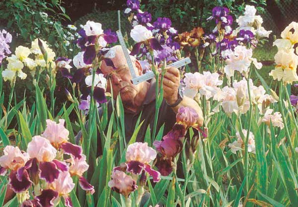 Horst Schindler strebt nach der perfekten Iris-Blüte