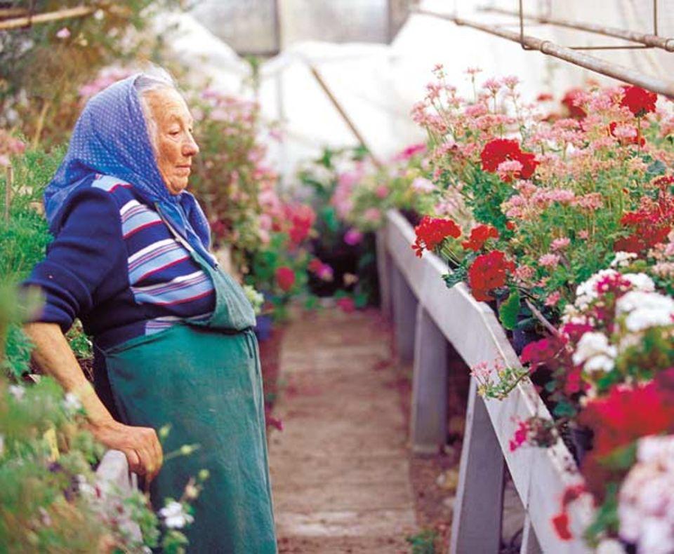 Margarete Wiedemann lebt für ihre Sammlung duftender Pelargonien