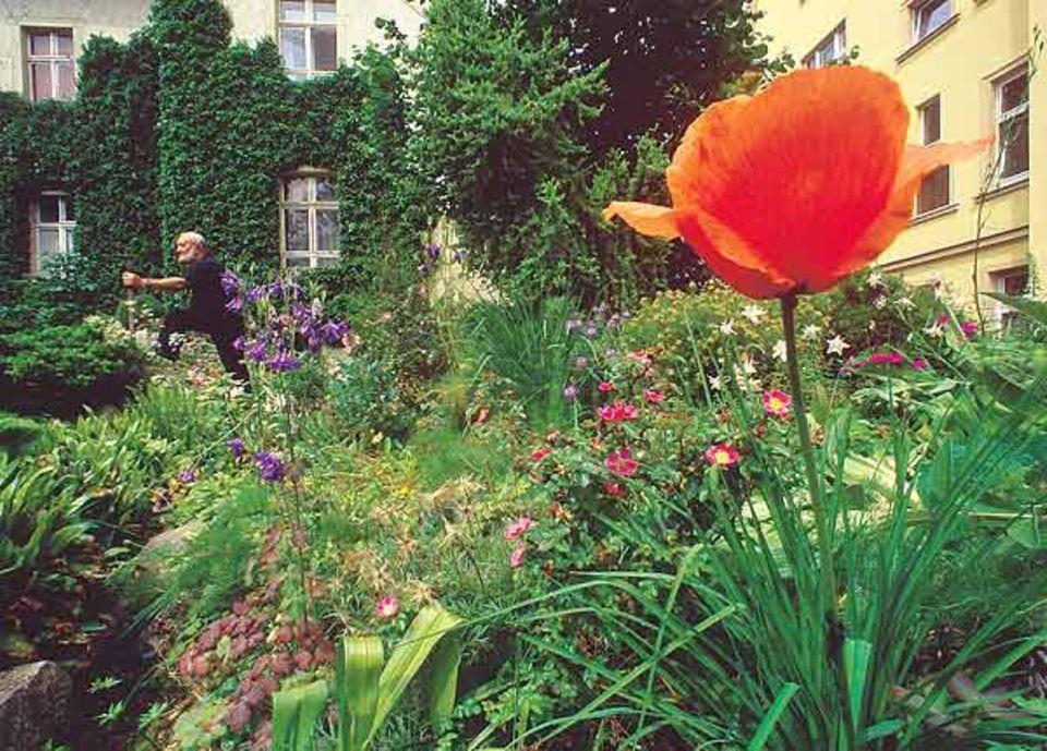 Jörg Stellmacher schmückte seinen Hinterhof mit seltenen Hochgebirgspflanzen