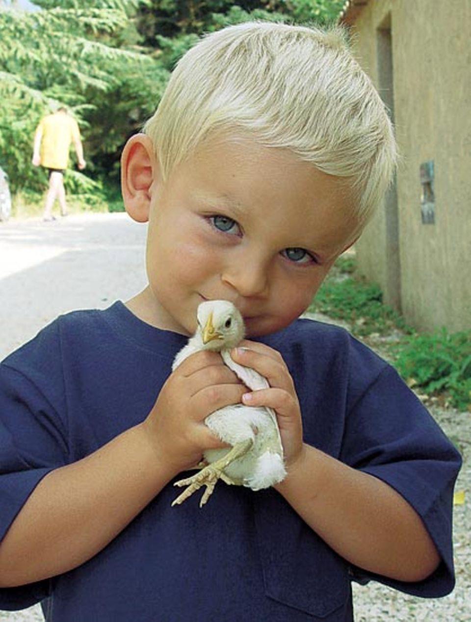 Dicke Freunde: Beim Hühnerfüttern kümmert sich der kleine Fabrice besonders aufmerksam um sein Lieblingsküken