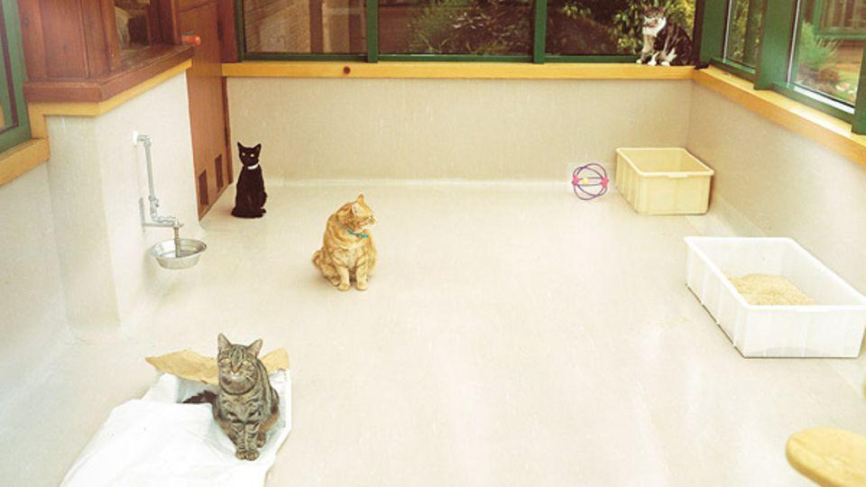 Während die Laborhunde regelmäßig im Freien herumtollen dürfen, treffen sich die Katzen nur in den Gemeinschaftsräumen.Denn eine in freier Natur selbst erlegte Maus könnte die Ergebnisse der ausgeklügelten Ernährungstests verfälschen