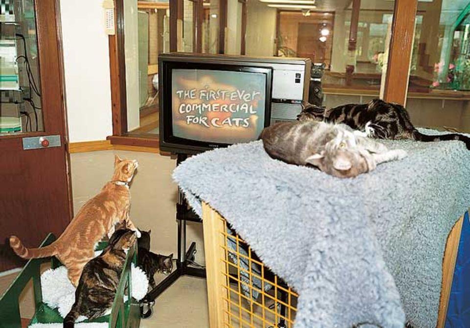 Können Katzen Werbung verstehen. Hier wird der allererste Werbespot für Katzen ausgetestet. Ob die Samtpfötchen hinterher wohl wirklich das beworbene Futter bevorzugen werden?