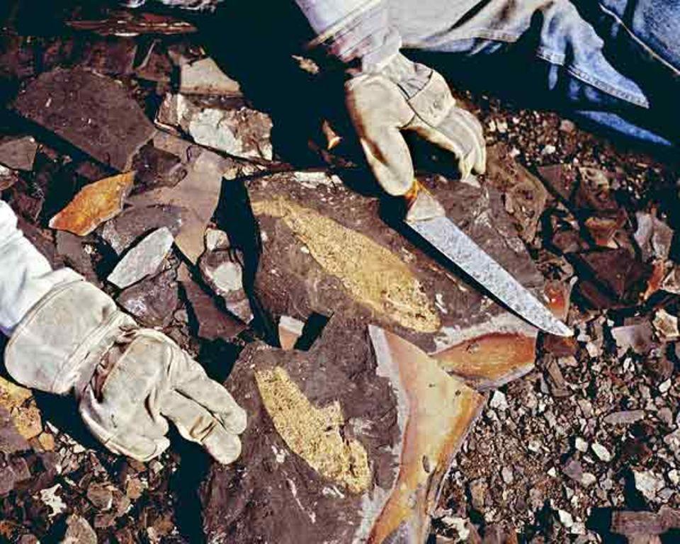 Raubgräber: Waldboden durchwühlen als verbotenes Hobby