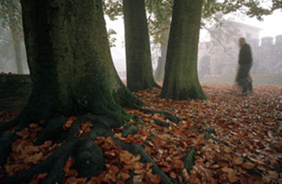 Raubgräber: Sie schleichen in der Dämmerung durch den Wald, immer auf der Suche nach Schätzen aus vergangener Zeit