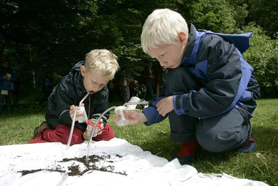 """Aaron und Aron sammeln Käfer mit ihrem so genannten """"Insektenstaubsauger"""""""
