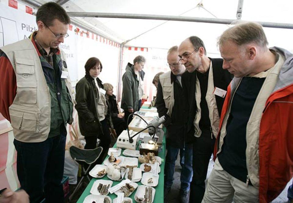 GEO-Chefredakteur Peter-Matthias Gaede und Bundesumweltminister Jürgen Trittin begutachten die von den Experten gesammelten Pilze