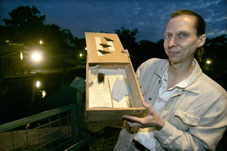 Der freie Biologe Karsten Callasch präsentiert eine in den Abendstunden gefangene Fledermaus