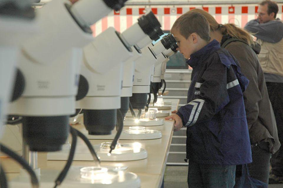 Am Grünflächenamt wurde das Mikroskopierzentrum aufgebaut. Hier können die eifrigen Sammler ihre Funde unter dem Binokular untersuchen und begutachten