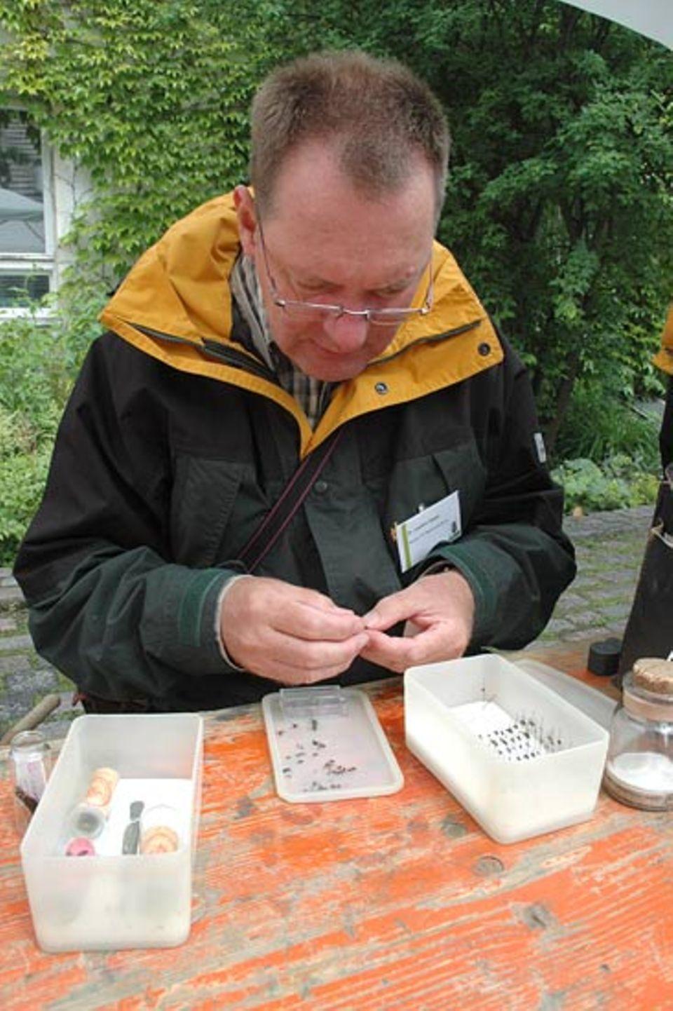 """Der Fliegenexperte Dr. Joachim Ziegler """"nadelt"""" seine Funde, d. h. nach dem Abtöten der Fliegen werden sie auf feine Nadeln gespießt um sie in eine endomologische Sammlung einzugliedern"""