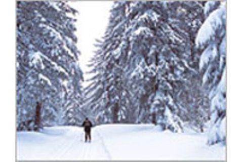 Bayerwald-Loipe auf Skiern