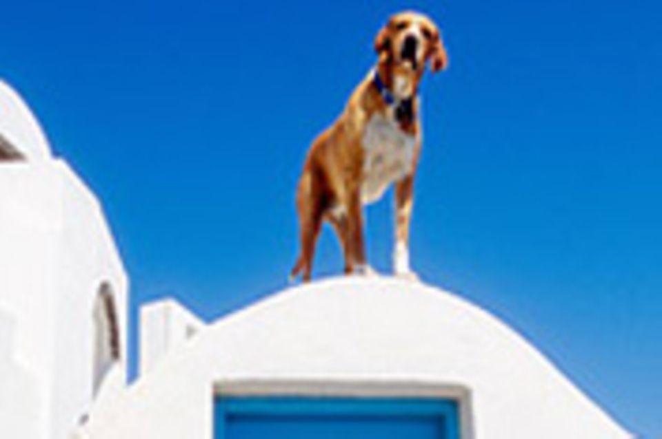 Wenn Hunde aus Südeuropa nach Deutschland reisen
